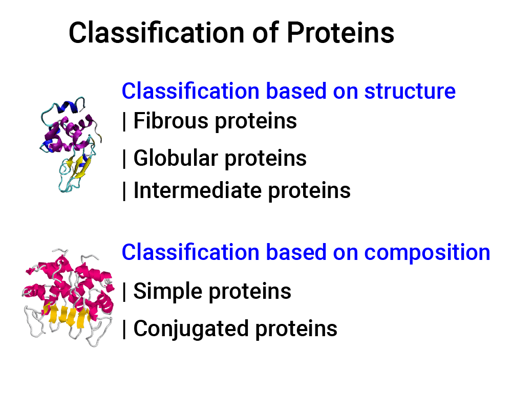 Learn Classification of Proteins in 2 minutes.