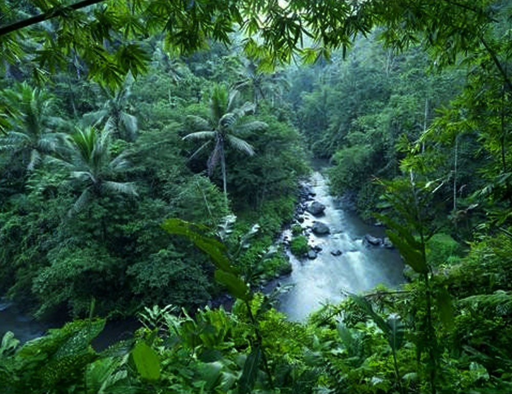 Learn Tropical Evergreen Forests In 3 Minutes I can custom made designs and sizes, if you forest green and emerald tones mixed with berry and dusky pinks.what a combo! learn tropical evergreen forests in 3